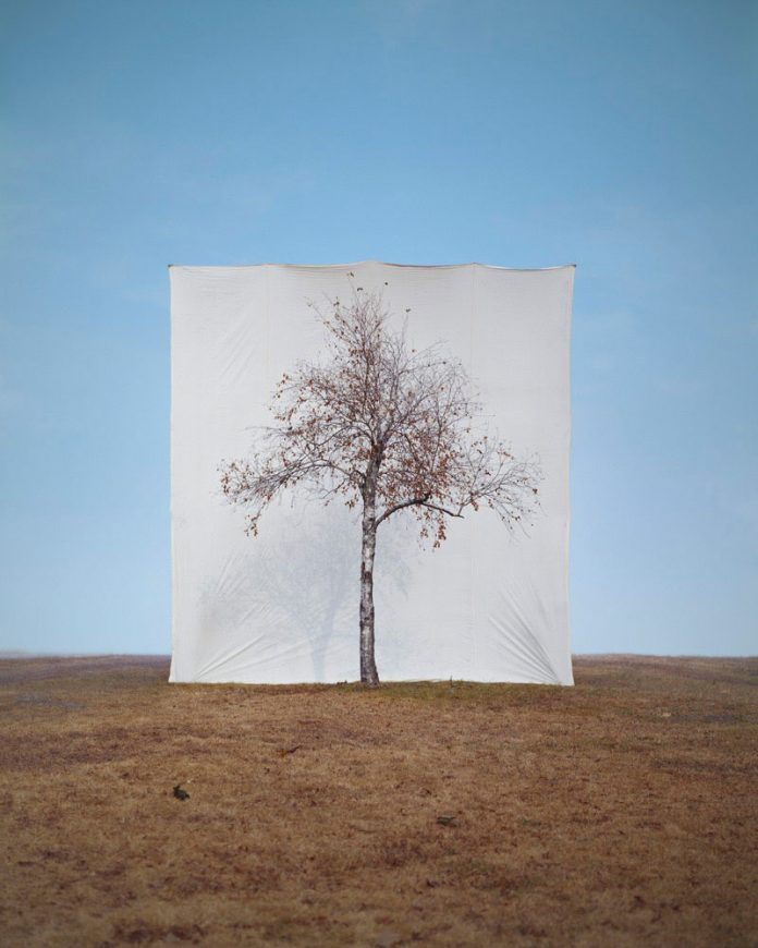Myoung Ho Lee, Tree #1, 2006, From the series Tree, archival inkjet print