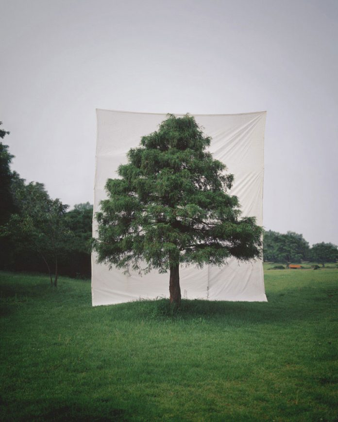 Myoung Ho Lee, Tree #10, 2006, From the series Tree, archival inkjet print