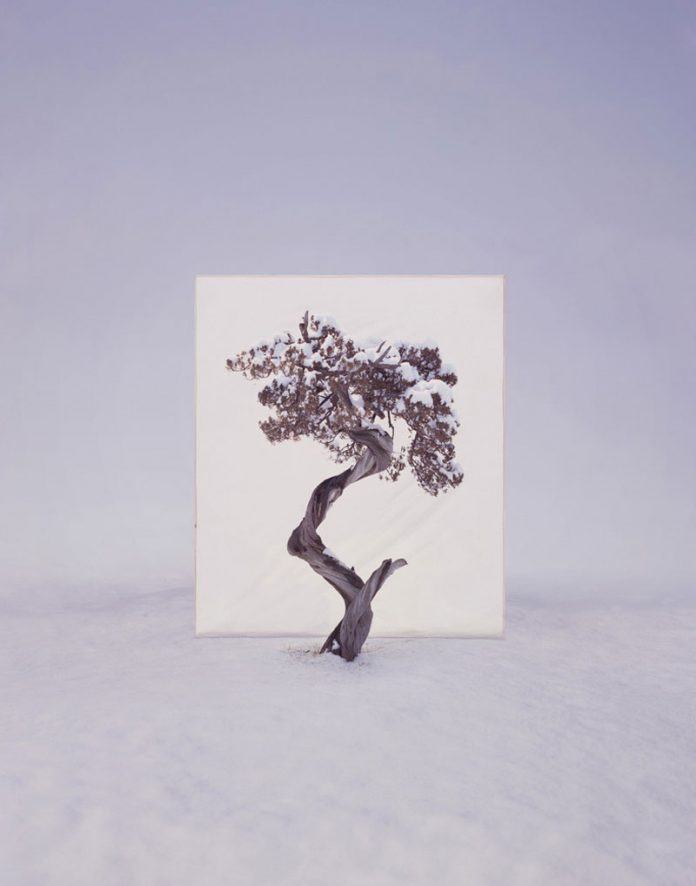 Myoung Ho Lee, Tree #12, 2008, From the series Tree, archival inkjet print