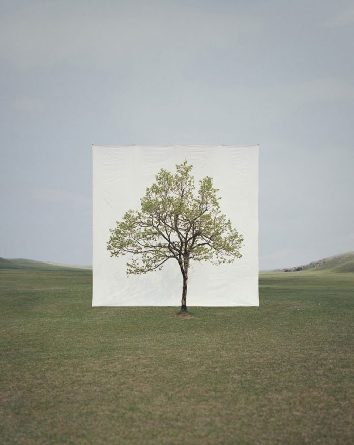 Myoung Ho Lee, Tree #14, 2009, From the series Tree, archival inkjet print