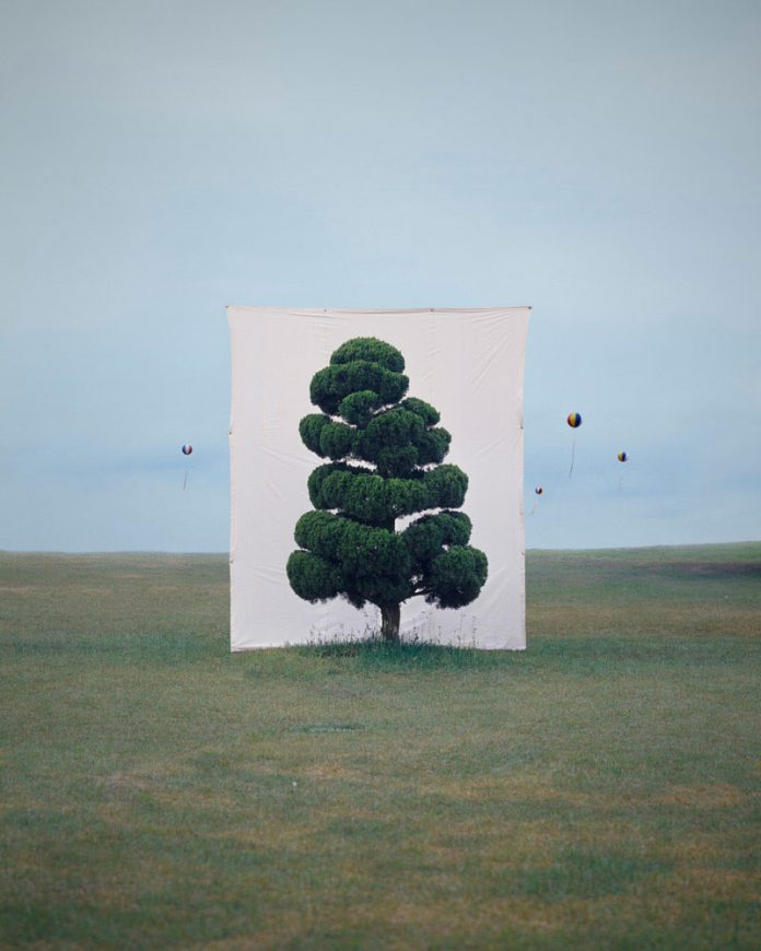 Myoung Ho Lee, Tree #2, 2006, From the series Tree, archival inkjet print