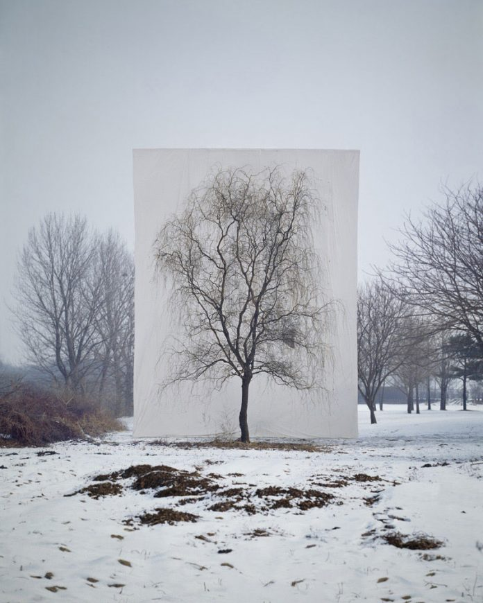 Myoung Ho Lee, Tree #3, 2006, From the series Tree, archival inkjet print