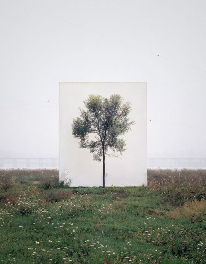 Myoung Ho Lee, Tree #6, 2008, From the series Tree, archival inkjet print