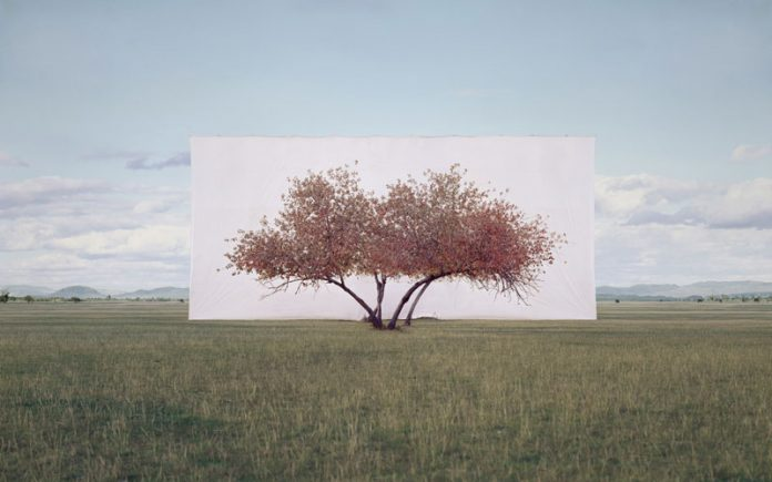 Myoung Ho Lee, Tree...#2, 2011, From the series Tree Abroad, archival inkjet print