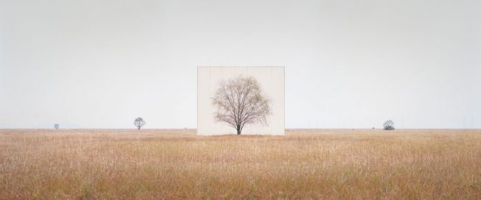 Myoung Ho Lee, Tree...#3, 2013, From the series Tree Abroad, archival inkjet print