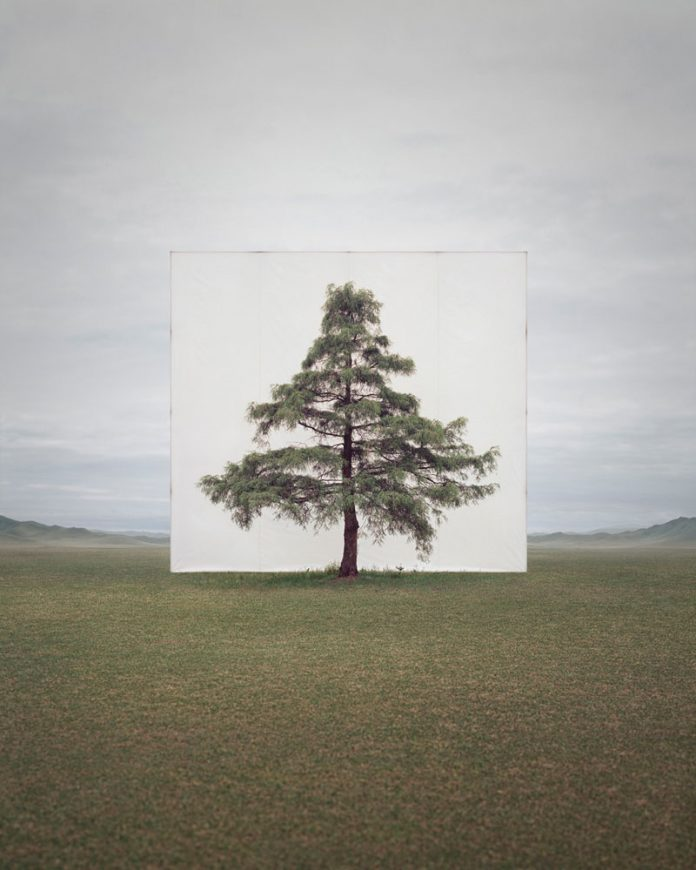 Myoung Ho Lee, Tree...#6, 2014, From the series Tree Abroad, archival inkjet print