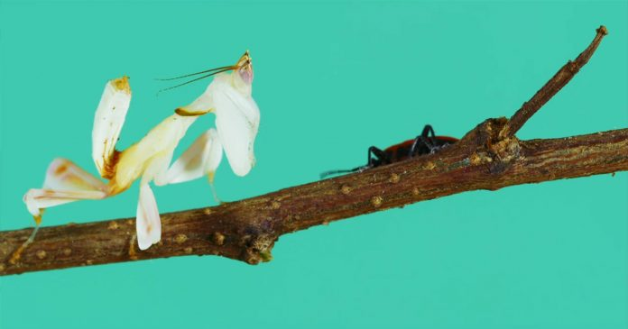 Experimental video by Thomas Blanchard about the insect cycle and flowers.
