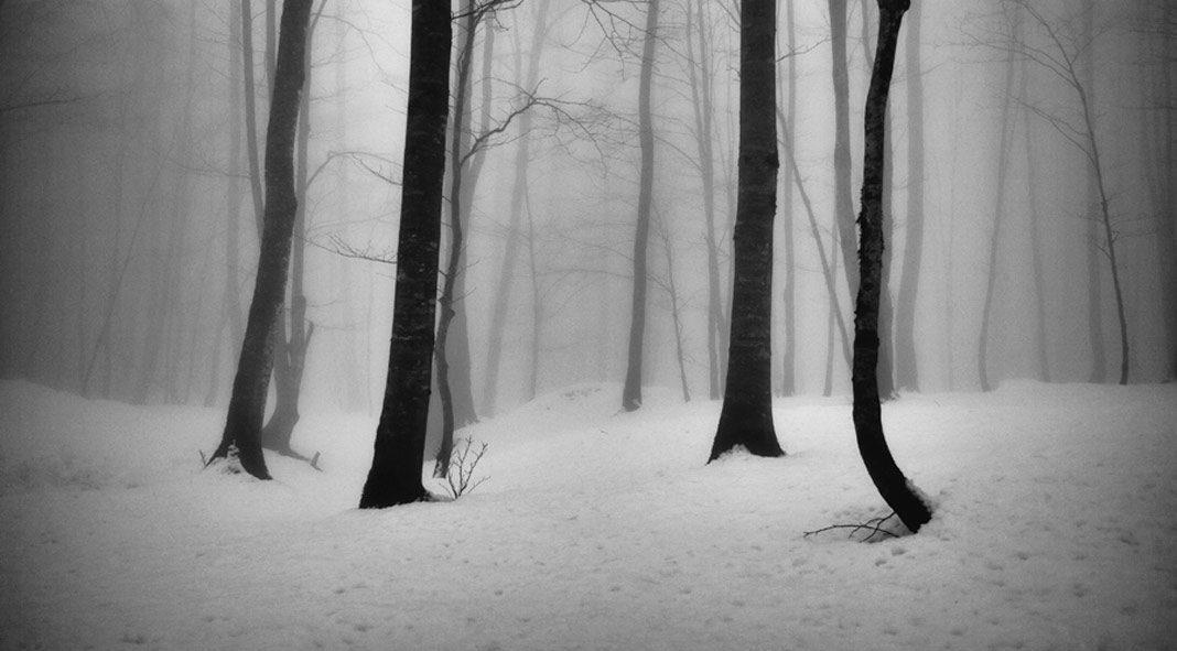 The Tree photo project by Ali Shokri.