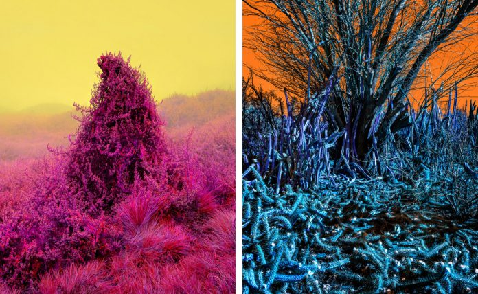 Fever Dream, a photo series by Dillon Marsh.