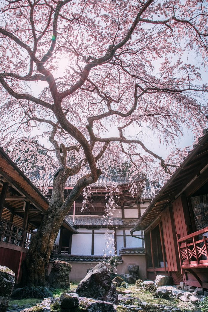 Four Seasons in Kyoto - Photography by Ying Yin