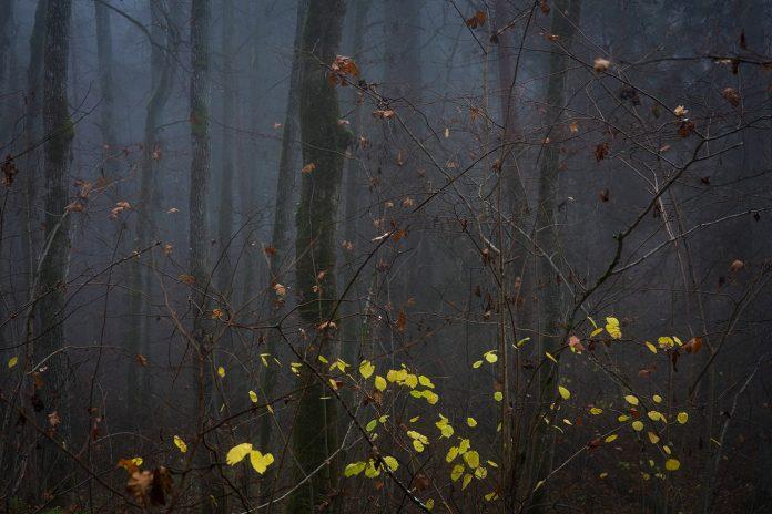 November's Somber Melody by Mindaugas Buivydas.