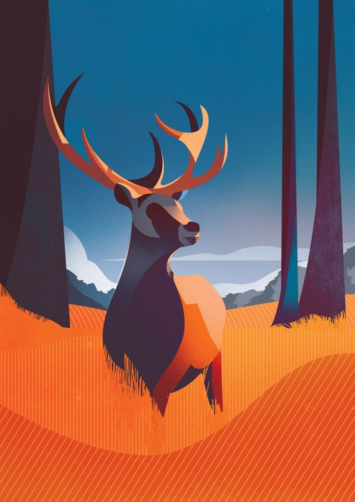 Animal Studies by Charlie Davis